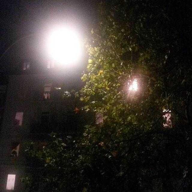 Baumbeleuchtung