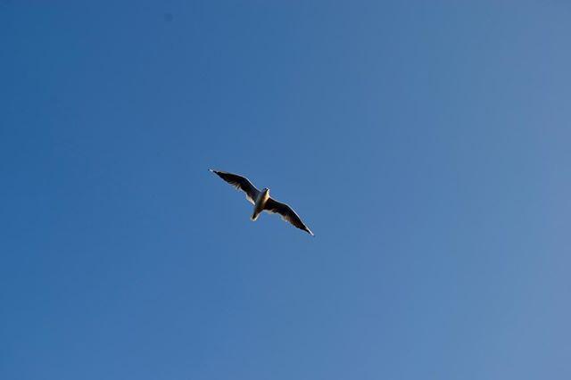 Möwe im Flug bei einem blauen Himmel. #möwe #flug #himmel #fotografdesjahres2019