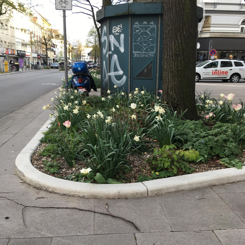 Blumen auf der Osterstrasse. #blumen #osterstrasse #eimsbush #eimsbüttel