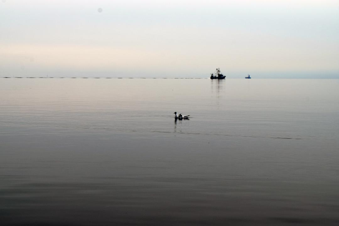 Ein Schiff, ein paar Enten bei ruhiger See in der Bucht von Büsum.A ship, some ducks at calm sea in the bay of Büsum.#Schiff #Enten #See #Bucht #Büsum #nordsee #meer #wasser #ruhigesee #Ship #Ducks #Sea #Bay #Büsum #NorthSea #Sea #water #SilentSea