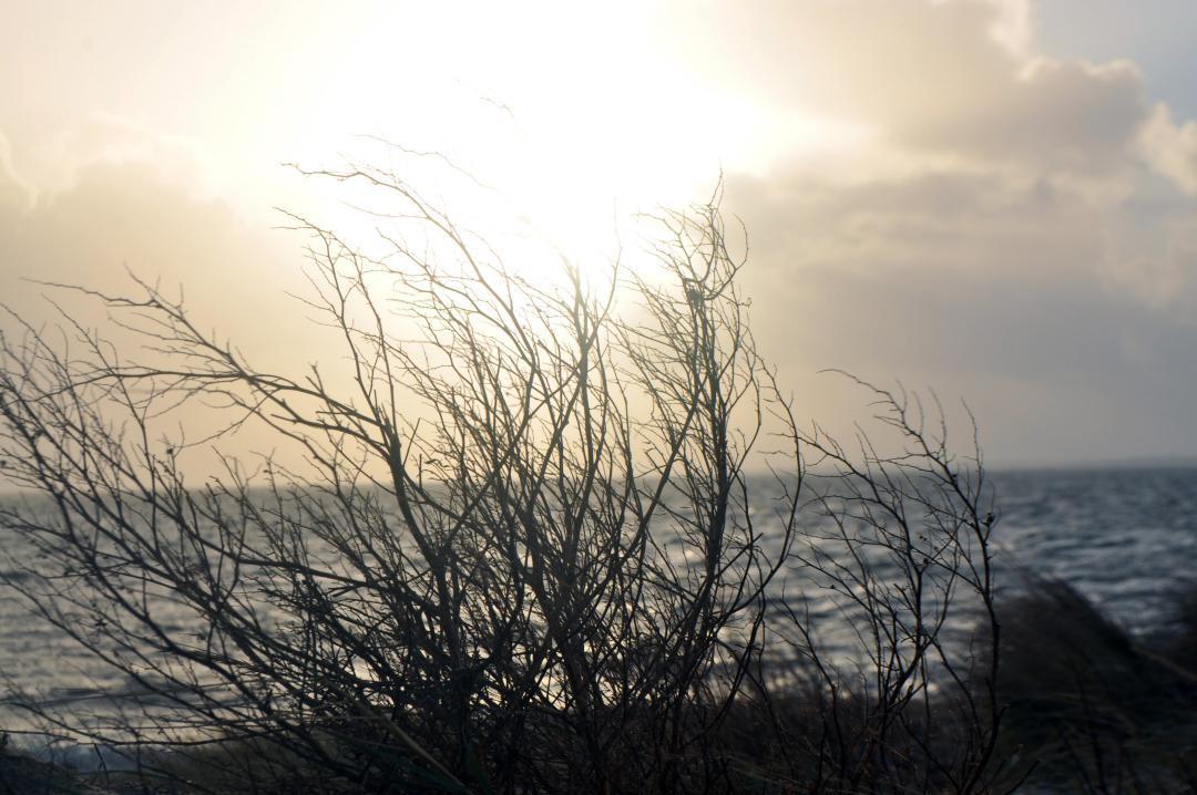 An einem Winterabend im Jahre 2016 auf Rømø aufgenommen.Recorded on a winter evening in 2016 on Rømø.#Winterabend #Jahre #2016 #Rømø #meer #sonnenuntergang #sonne #strauch #wasser #himmel #Winterevening #years #sea #sunset #sunny #bush #water #sky