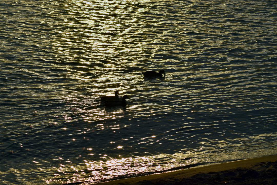 Enten bei Teufelsbrück.Ducks near Teufelsbrück.#enten #ducks #teufelsbrück #hamburg #hh #hh_lieben #wasser #water #elbe #hafen #port